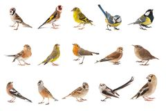 Free Set Of Small Song Birds Isolated On White Background Stock Photo - 143588800