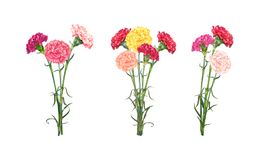 Set Of Three Carnation Bouguets Stock Photo