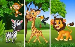Set Of Three Wild Animals With Nature Background Stock Photos