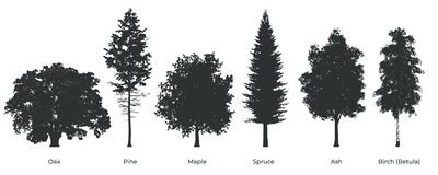 Free Set Of Tree Silhouette Isolated On White Backgorund. Royalty Free Stock Images - 169177259