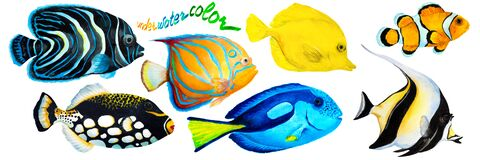 Free Set Of Tropical Reef Fish Clownfish, Moorish Idol Zanclus, Emperor Angelfish, Blue-ringed Angelfish, Blue Tang, Yellow Tang Stock Images - 172404514