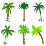 Set Of Various Palms Stock Photo