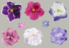 Set Of Violets On Grey Background Stock Photography