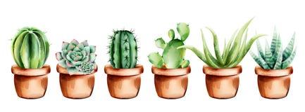 Free Set Of Watercolor Cactus, Aloe Vera And Flowers In Ceramic Pot Stock Images - 168304414