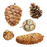 Set Of Watercolor Cones Stock Image