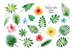 Set Of Watercolor Leaves And Flowers. Royalty Free Stock Photo