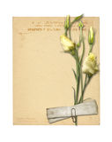 Set of old archival papers and vintage postcard with bouquet Royalty Free Stock Photography