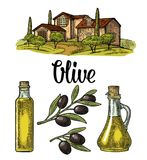 Set olive. Bottle glass, branch with leaves, rural landscape villa. Set olive. Bottle and Jug glass of liquid with cork stopper and branch with leaves. Rural Stock Image