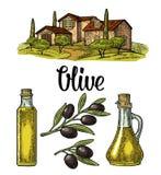 Set olive. Bottle glass, branch with leaves, rural landscape villa vector illustration