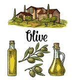 Set olive. Bottle glass, branch with leaves, rural landscape villa. Set olive. Bottle and Jug glass of liquid with cork stopper and branch with leaves. Rural Stock Images