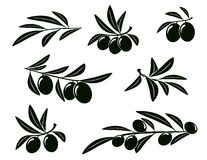 Set of olive branch Stock Image