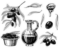 Set of Olive oil and branch of trees. Organic vegetarian product in bottle. Green plant for healthy diet. Black fruit. For cooking food. Engraved hand drawn in Stock Image