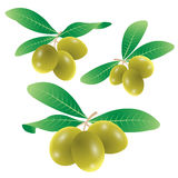 Set of olives vector Royalty Free Stock Image