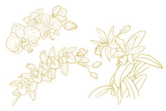 Set of one-colored outlined orchids Royalty Free Stock Photography