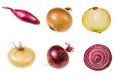 Set of onions of different qualities. Set of organic onions of different qualities isolated on white background Royalty Free Stock Image