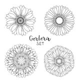Set of 4 Open petals daisy head flower. Floral Botany drawings. Black and white line art. Gerbera daisy Sketch illustration. stock illustration