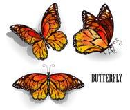 Set of orange butterflies monarchs Stock Images