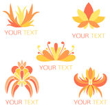 Set of 5 orange exotic floral logos Stock Photography