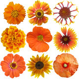 Set of Orange  Flowers Stock Images