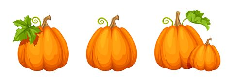Set of orange pumpkins. Vector illustration. Stock Photos