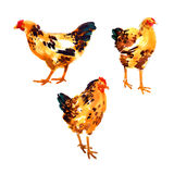 Set with orange-red watercolor hens and roosters Stock Image