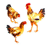 Set with orange-red watercolor hens and roosters Royalty Free Stock Photography