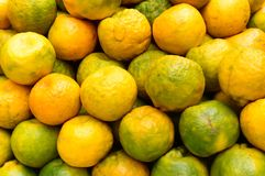 An set of orange, type of citrus fruit, Studio shot, , Close up. Seamless colorful abstract stock images