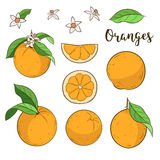 Set with oranges Royalty Free Stock Photography
