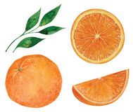 Set of oranges Royalty Free Stock Images