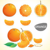 Set of oranges with leaf in various styles Royalty Free Stock Photos