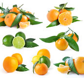 Set of oranges and lime. Set of juicy organic oranges and lime isolated on white background Stock Photo