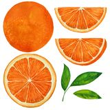 Set of oranges. Watercolor illustration on white background vector illustration