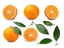 Set of oranges Stock Images