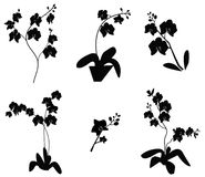 Set of Orchid branch silhouette Stock Images