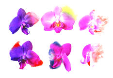 Set orchid flowers. Watercolor buds Stock Image