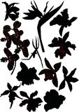 Set of orchid silhouettes Stock Photography