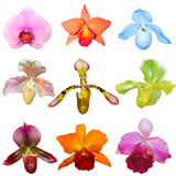 Set of Orchids Stock Images