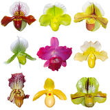Set of Orchids stock image