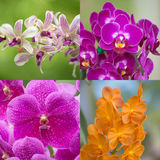 Set orchids Royalty Free Stock Photos