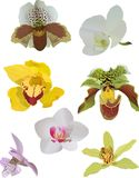 Set of orchids isolated on white Stock Images