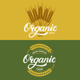 Set of organic farm hand written lettering logos, labels, badges or emblems for natural fresh products. Ears of wheat.  on background. Vector illustration Stock Photography