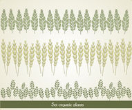 Set organic plants, vector Stock Image