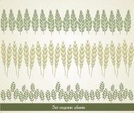 Set organic plants, vector Stock Image
