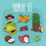 Set of  organic tropical fruit cliparts. Set of  clipart, tropical fruits, passion fruit, mango, pineapple, papaya, figs, coconut, pitaya, lime. Realistic hand Stock Photography
