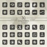 Set of organisms icons Royalty Free Stock Image