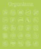 Set of organisms simple icons Royalty Free Stock Photos