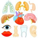 Set organy wśród twarzy i ciała ludzkiego Wektorowy Illustratio Obrazy Royalty Free