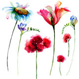 Set of original watercolor flowers Royalty Free Stock Photography