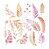 Set of ornamental plants, flowers, leaves, fruits and berries made in watercolors Stock Photo