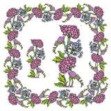 Set ornamenty - dekoracyjna ręka rysująca kwiecista rama i granica Fotografia Stock